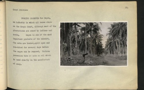 An early description of the coconut farming in Kenya, which was primarily owned by Indians and Arabs, for whom the indigenous Kenyans worked.