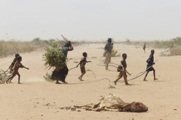 A family gathers sticks and branches for firewood and making a shelter on the outskirts of Dadaab, where many animals which have perished in the drought.