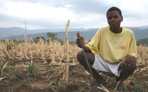 The drought in the eastern Horn of Africa in 2008 led to crop failures, death of livestock, and spiralling food prices.